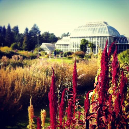 Es ist ein Klischee, aber: der botanische Garten ist tatsächlich eine Ruheoase mitten in der Stadt.
