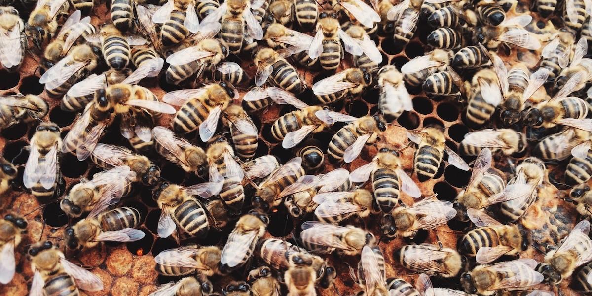 Momos Bienen